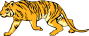 %22a gift of wildness%22 tiger_5